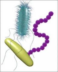 Spelet Bakterier och virus