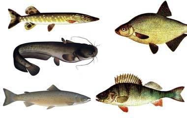Spelet Fiskspel