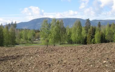 Spelet Vanliga träd i Sverige