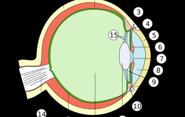 Spelet Mänskliga ögats anatomi
