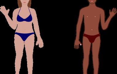 Spelet The Body - träna vad kroppens delar heter