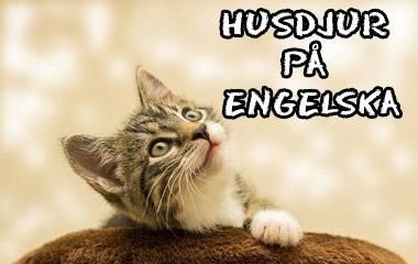 Spelet Husdjur på engelska