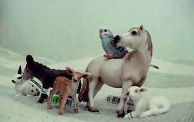 Spelet Djur på franska