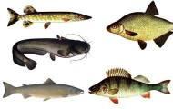 Fiskspel