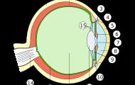 Mänskliga ögats anatomi