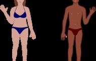 The Body - träna vad kroppens delar heter