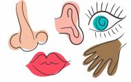 De fem sinnena