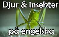 Insekter och andra djur