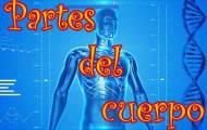 Kroppens delar på spanska