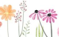Spela Fröväxternas delar och funktion